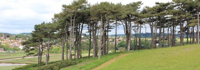 Budleigh Salterton - Through trees along River Otter, Ruth's coastal walk, through Devon