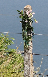 memorial flowers, Walls Hill, Torquay, Ruth's coastal walk, South West Coast Path