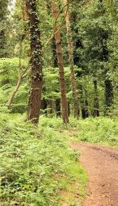 11 woods, east Devon, Ruth's coast walk