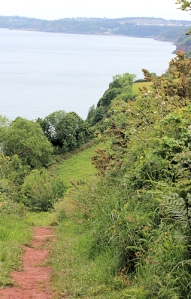 top of cliffs, Babbacombe Bay, Devon, Ruth on the South West Coast path.
