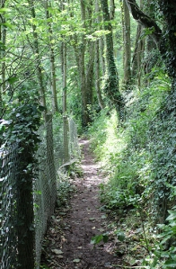 wooded path, Babbacombe Bay, Ruth on the South West Coast Path, Devon