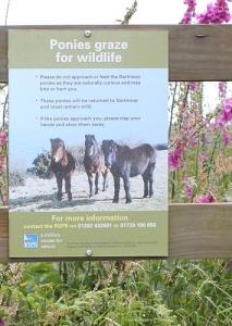 ponies warning sign, Ruth's coastal walk, Devon,