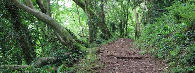 through woods, Watcombe, Devon, Ruth walking the coast of the UK