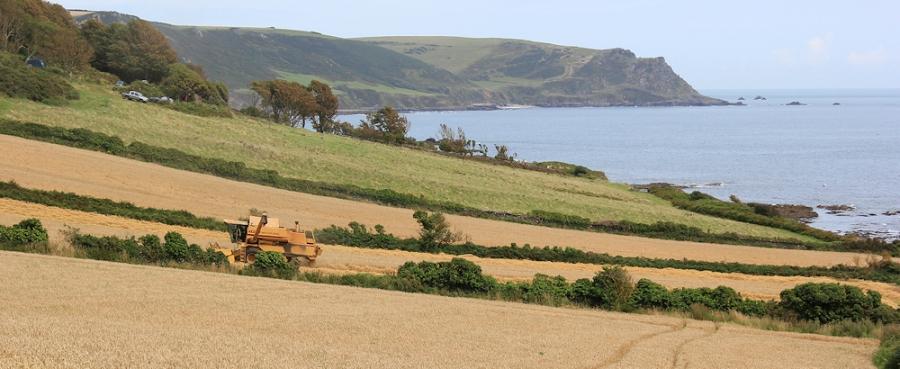 combine harvesting Maelcombe - Ruth's coastal walk, Devon
