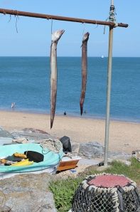 Eels at Beesands - Ruth walking the South West Coast Path