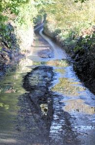 wet road, River Erme, Devon - Ruth walking around the coast.