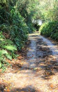 Ruth walking along roads in Devon, following her coastal walk