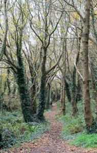 Ruth's coastal walk, Stoke Beach, through woods