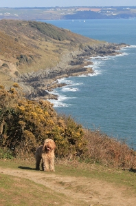 another dog, Cawsand Bay, Ruth on the South West Coast Path, Cornwall