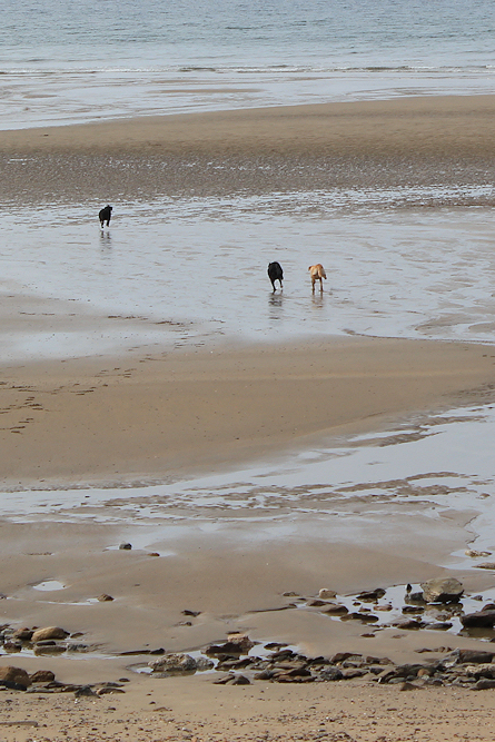 Porthluney Beach, Ruth walking the coast.