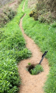 badger set, Ruth on her coastal walk, Cornwall