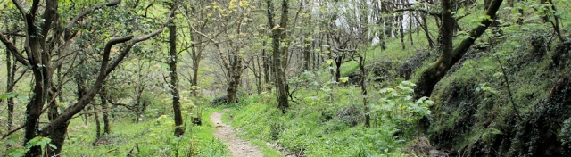 through woods, South West Coast Path, Ruth's coast walk