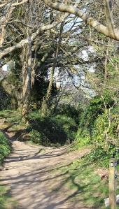 Ruth's coastal walk, walking through Covington Wood