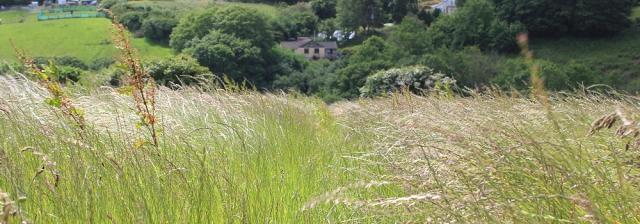08 hayfever fields, South West Coast Path, Ruth's coast walking