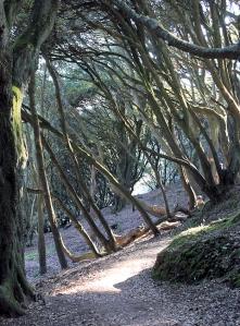 24 walking through trees, Mawnan, Ruth on her coastal walk