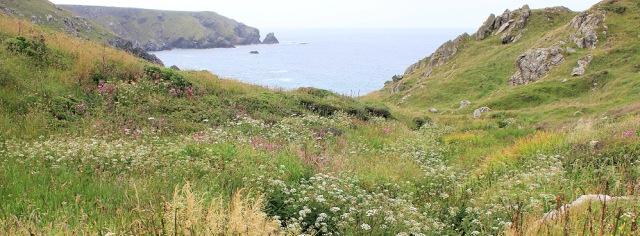 wild flowers on Predannack Head, Ruth's coastal walk
