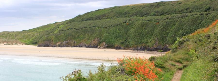 coming round Carrack Gladden, Ruth's coastal walk, Cornwall