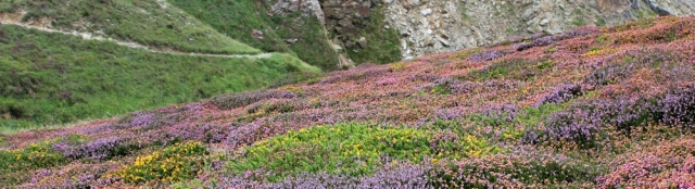 cliffs and flowers, Ruth walking the Cornwall coastline