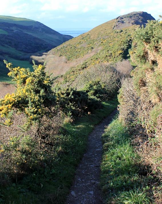 ledge from Castle Point, Ruth near Crackington Haven, South West Coast Path