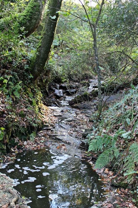 down through woods, SWCP, Ruth Livingstone