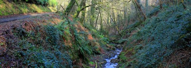 Hobby Drive, woods and stream, Ruth's coast walk