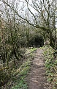 05a a bit of woodland, East Titchberry, Ruth walking the SW Coast Path, Devon