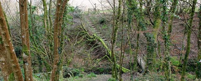 Barton Wood, Ruth on her coastal walk, North Devon
