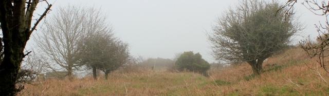 Mist above Buck's Mills, Ruths coast walk, Devon