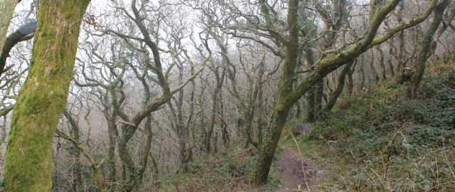 Misty woods, Ruth on the SW Coast Path, above Buck's Mills