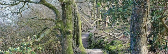 Woodland, Clovelly Court, Ruth's coastal walk