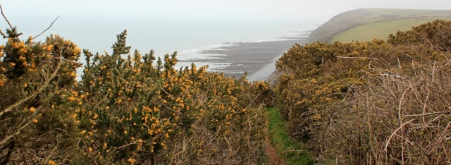 Babbacombe Cliff, SW coast path, Ruth's coastal walk, Devon