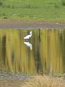 egret, Tarka Trail, Ruth on her coast walking,