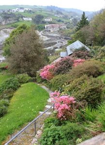 looking down into Lee Bay, Ruth on the SWCP, near Mortehoe