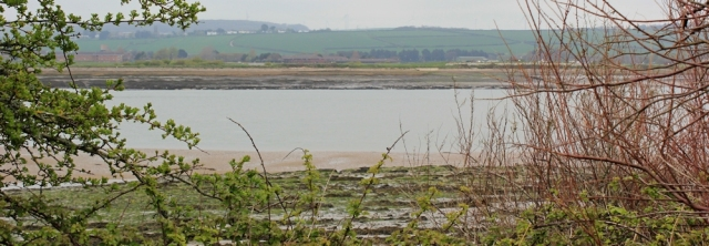 River Taw, from Home Farm Marsh, Ruth walking through Devon
