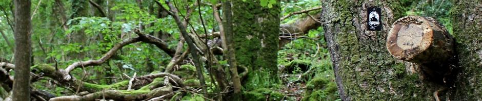 woods near County Gate, Ruth Livingstone
