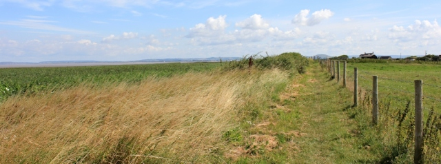unexpected coast path to Stert Point