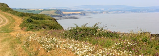 lovely flowers along the North Somerset Coast, Ruth's coast walking