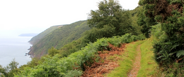 walk begins to get woody, Kipscombe Enclosure, Ruth on the SWCP, north Devon