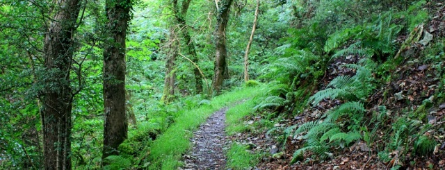 woods, walking from Lynmouth to Porlock, Ruth on SWCP