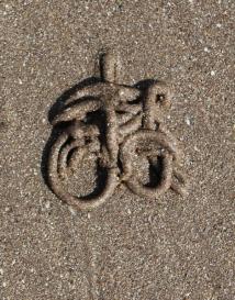 09c bicycle, worm casts, Ruth's coastal walking