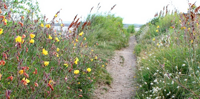 coast path Minehead to Dunster, Ruth walking the Somerset Coast Path