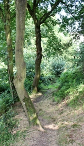 path through trees, Coleridge Way, Ruth Livingstone