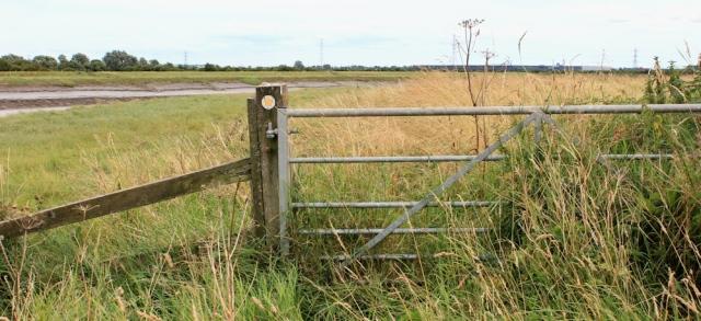 overgrown path, Parrett's Trail, Ruth walking the Somerset coast