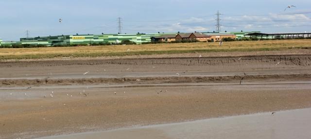 Morrisons on River Parrett, Ruth's coastal walk