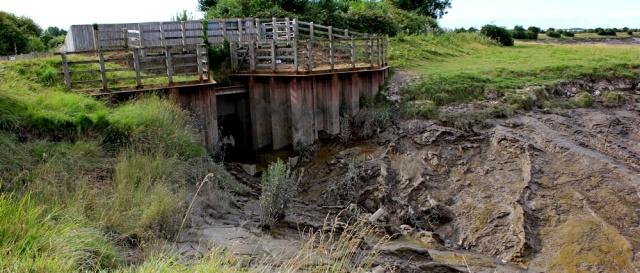 Mud at Pims Pill, Ruth walking the River Parrett Trail