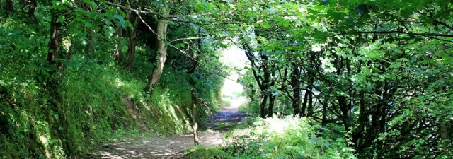 woods on way to Hele, Ruth walking from Ilracombe