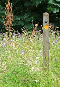 footpath sign with wild flowers, Ruth walking the SWCP