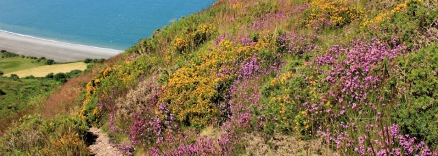 flowers on Hurlstone Point, Ruth Livingstone