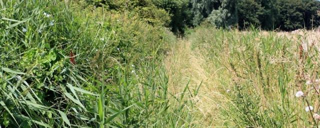 overgrown path, Ruth walking around Hinkley Point, Somerset coast