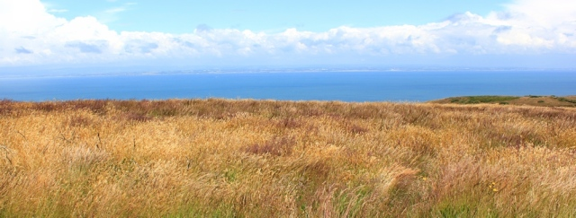 prarie land, SWCP, Ruth's coastal walk on Bossington